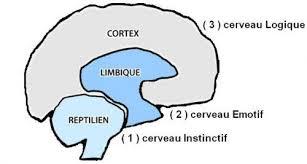 3-cerveaux-2