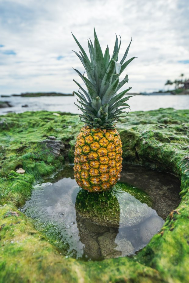 pineapple-supply-co-57242