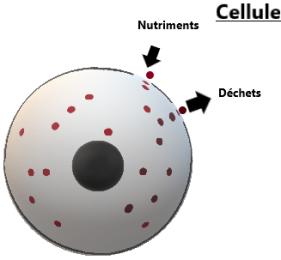 cellule2